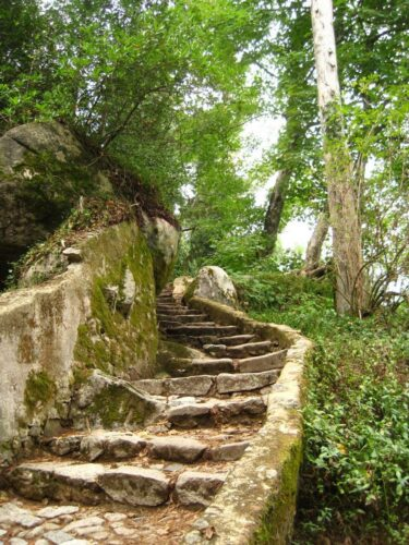 In der oberen Hälfte des Bildes ist grüner Wald zu sehen. Im Hintergrund blitzt etwas blauer Himmel durch. Von der Mitte des Bildes bis in den Vordergrund des linken Bildecks schlängelt sich eine alte moosige Steintreppe.